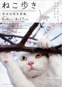 岩合光昭写真展「ねこ歩き」が静岡県の佐野美術館で8/17まで開催中!