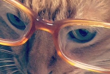 眼鏡をかけてムッとしている猫の写真