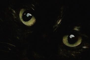 黒っぽい猫のどアップ写真