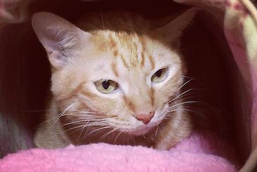 猫ベッドの中でたたずむ猫の写真