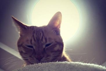 眠そうに目を細める猫の写真