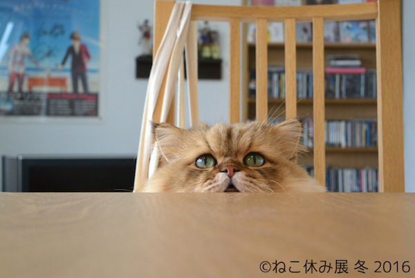 ふーちゃん 猫