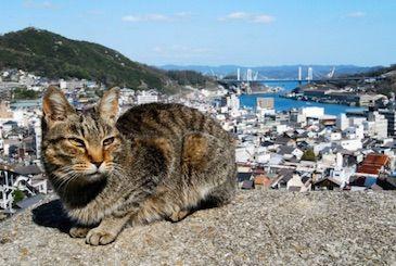 2/21に尾道で猫祭りが開催。JTBの宿泊ツアーもあるぞー!