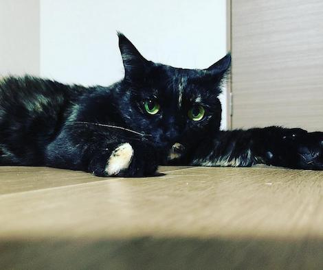 腹ばいになってカメラを見つめる猫の写真