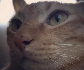 茶トラ猫の顔をアップで撮影した写真です