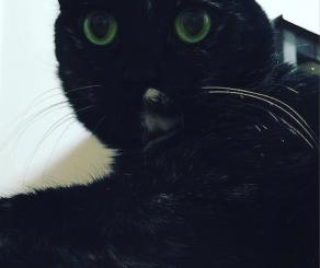 目がまんまるになった猫の写真