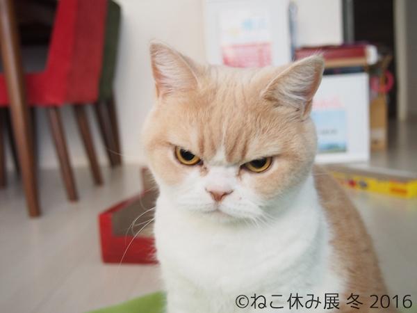岡田モフリシャス 小雪 猫