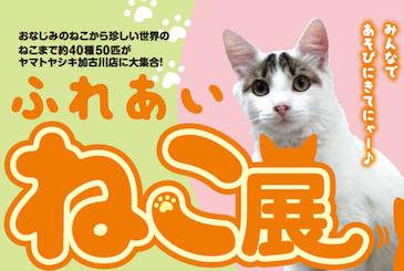 アビシニアンなど40種の猫と触れ合えるイベントが開催中!