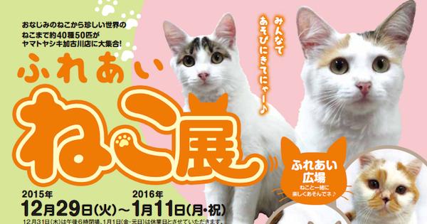 猫のイベント