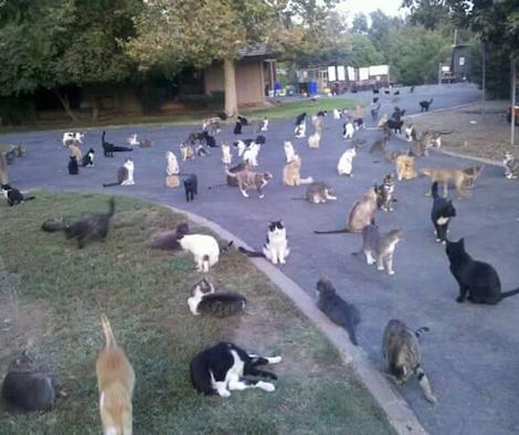 1100匹の猫と暮らすアメリカの女性が話題に