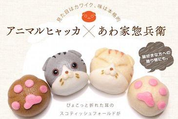 猫好き必見「スコティッシュフォールドまんじゅう」が発売!