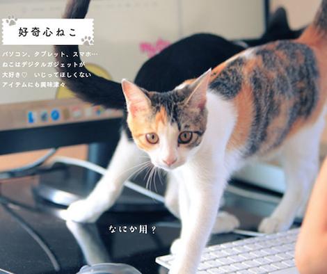 邪魔をする猫の写真集「じゃまねこ」