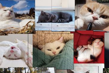 最大級の猫写真展が1/29から開催されるぞ〜作品は300点以上!