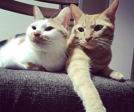 寄り添い合う猫の写真