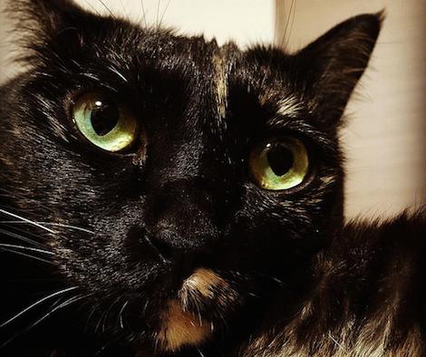 手に顔をのせてたたずむ猫の写真