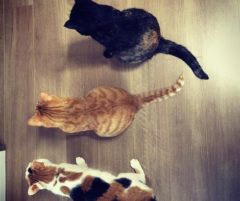 横一列に並んで待機する3匹の猫の写真