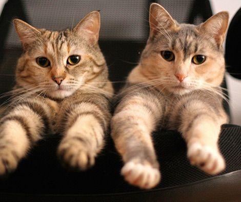 猫の性別当てクイズ!猫の顔写真で性別を見分けられますか?