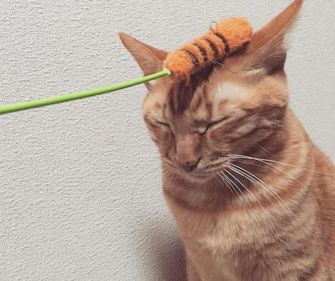 猫じゃらしでペシリ!とされてもまだ眠そうな猫の写真