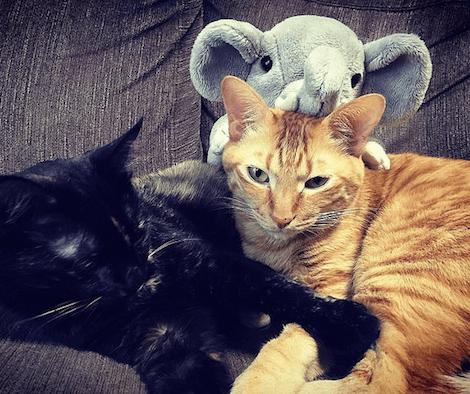 象のぬいぐるみと猫2匹のスリーショット