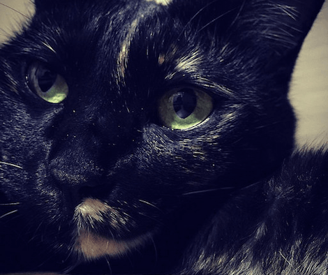 ぼんやりと物思いに耽るサビ猫の写真