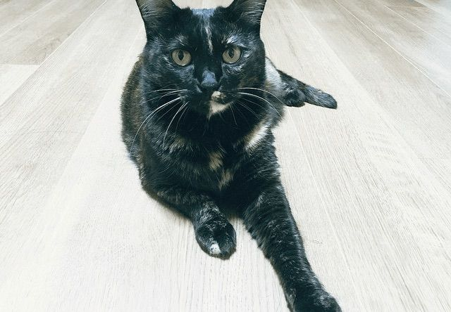 今日は猫の日。真正面から撮影した一枚。