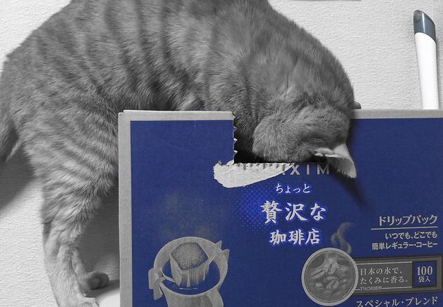 カメラに気づかずコーヒー箱を漁る猫の写真