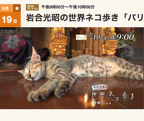 岩合光昭の世界ネコ歩き。2月19日の新作は「バリ島」です!