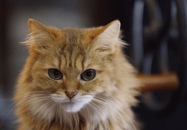 【2016年版】猫を飼っている芸能人、40人を一挙大公開!