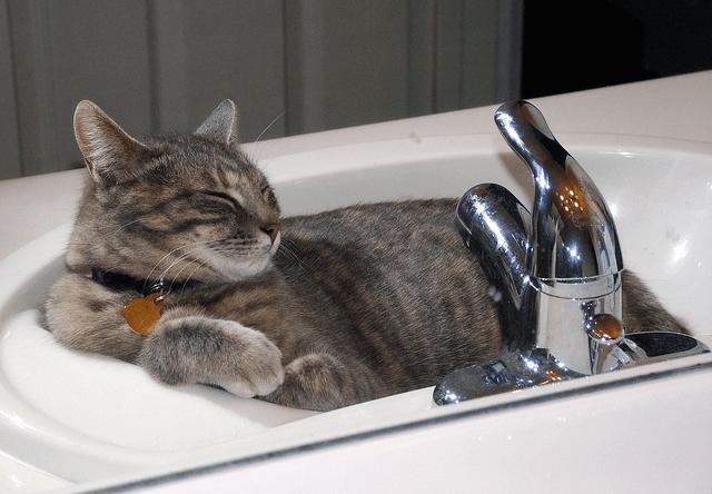 これは可愛い!洗面器を寝床にする猫の写真23連発
