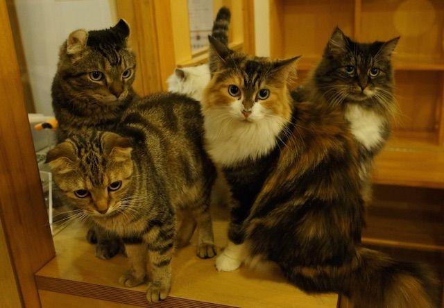 猫カフェCattail(キャットテイル) – 大阪 心斎橋の猫カフェ