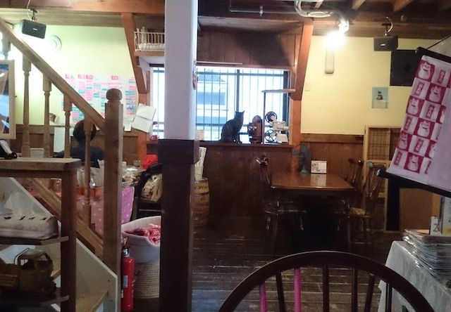 ツキネコカフェ – 札幌 西28丁目の猫カフェ
