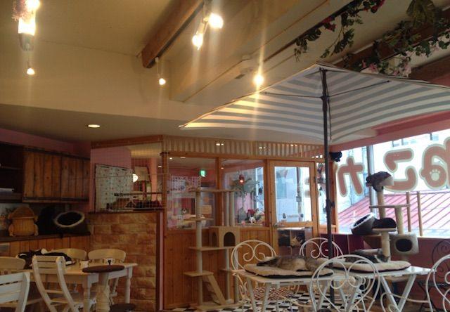 天使のこねこネコ – 仙台 青葉区/一番町の猫カフェ