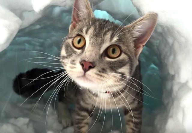 雪を掘りまくってトンネルを作る猫 - 猫のおもしろ動画