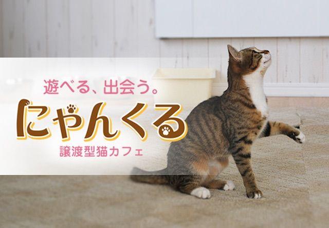 明日、横浜の桜木町に猫カフェ「にゃんくる」が新規開店!