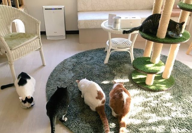 注文の多い猫Cafe