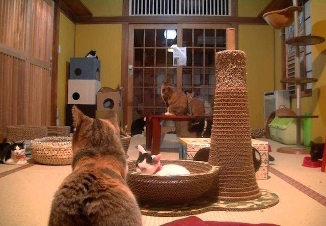 ネコリパブリック東京店 – 東京 お茶の水の猫カフェ