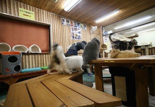 ねこまんま – 名古屋 御器所の猫カフェ