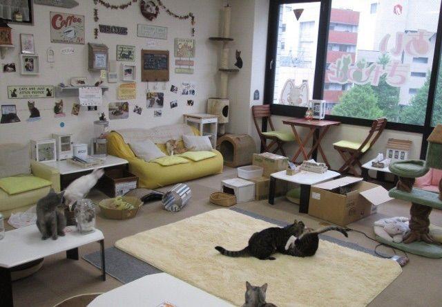 あいきゃっと 仙台店 – 青葉区/仙台駅前の猫カフェ