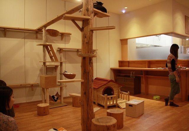 かごにゃん 並木坂店 – 熊本 中央区/並木坂の保護猫カフェ