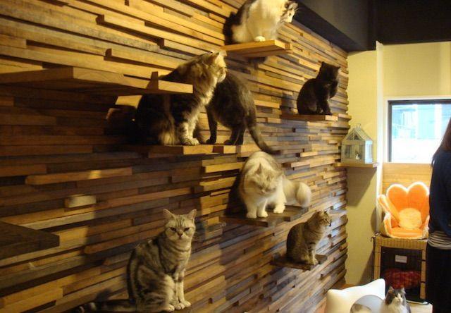 猫の時間 アメリカ村店