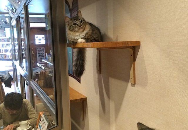 まねき猫 – 広島 西区/横川の猫カフェ