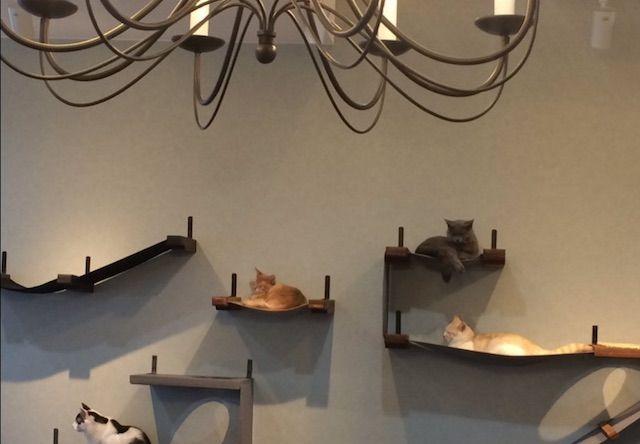 Nyantasista(ニャンタジスタ) – 大阪 八尾市/河内山本の猫カフェ