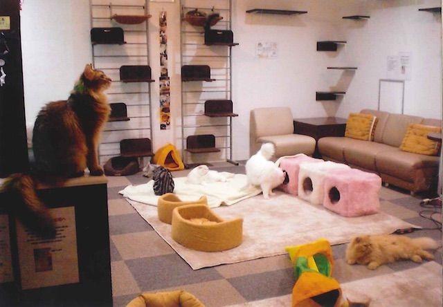 キャットストリート – 名古屋 栄の猫カフェ