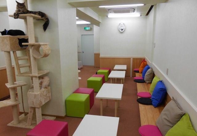 猫カフェSO-SE-KI – 福岡 南区/大橋の猫カフェ