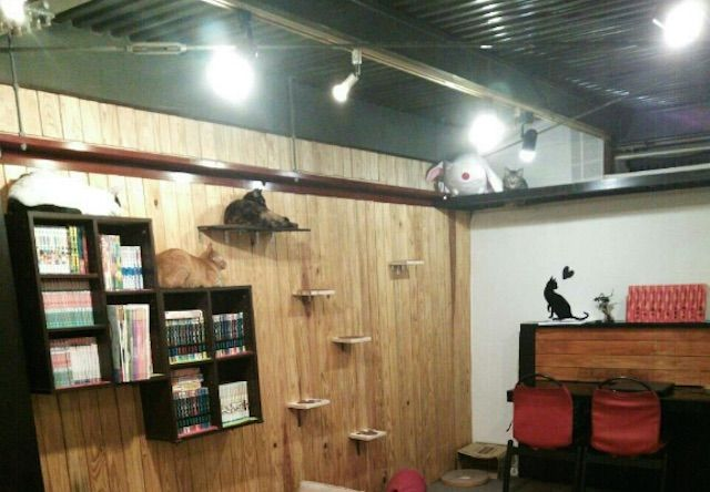 猫カフェ SHANA(シャナ) – 奈良 大和高田の猫カフェ
