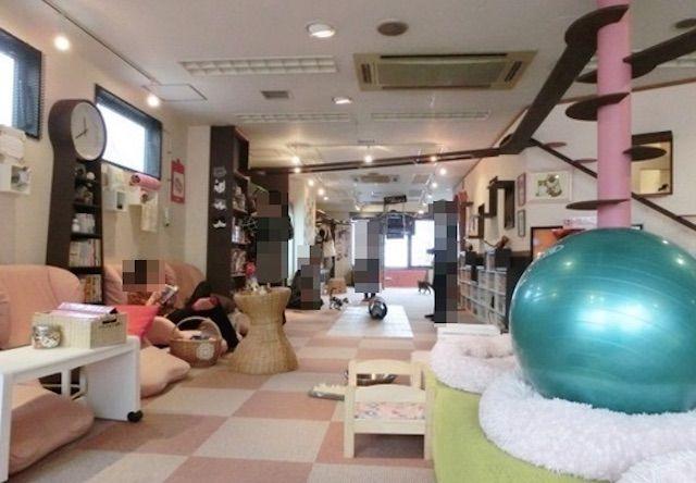 猫家 大宮店 – 埼玉 大宮駅の猫カフェ