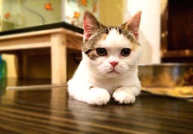 保護猫カフェ&金魚カフェ マンチカン(鶴橋店)」