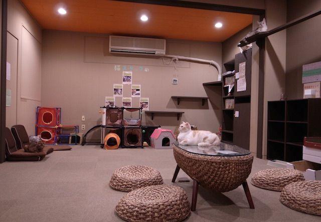 ねこカフェMyキャット – 名古屋 中区/大須の猫カフェ