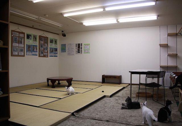 猫茶茶茶 – 静岡 浜松市/浜北の猫カフェ