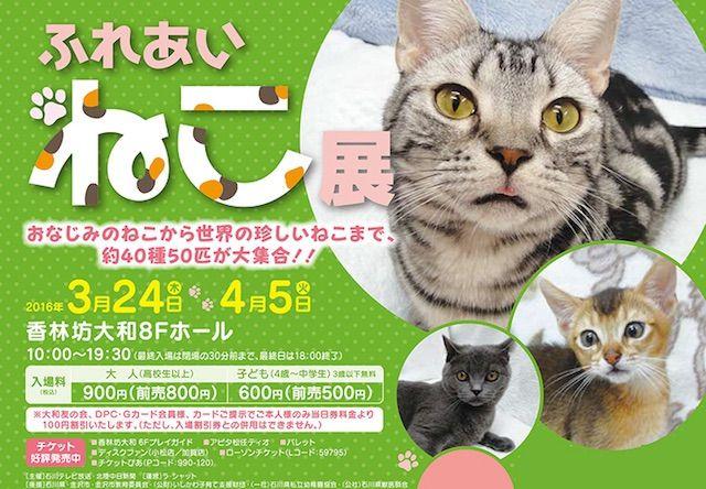 40種類の珍しい猫と触れ合えるイベントが金沢で開催中〜!